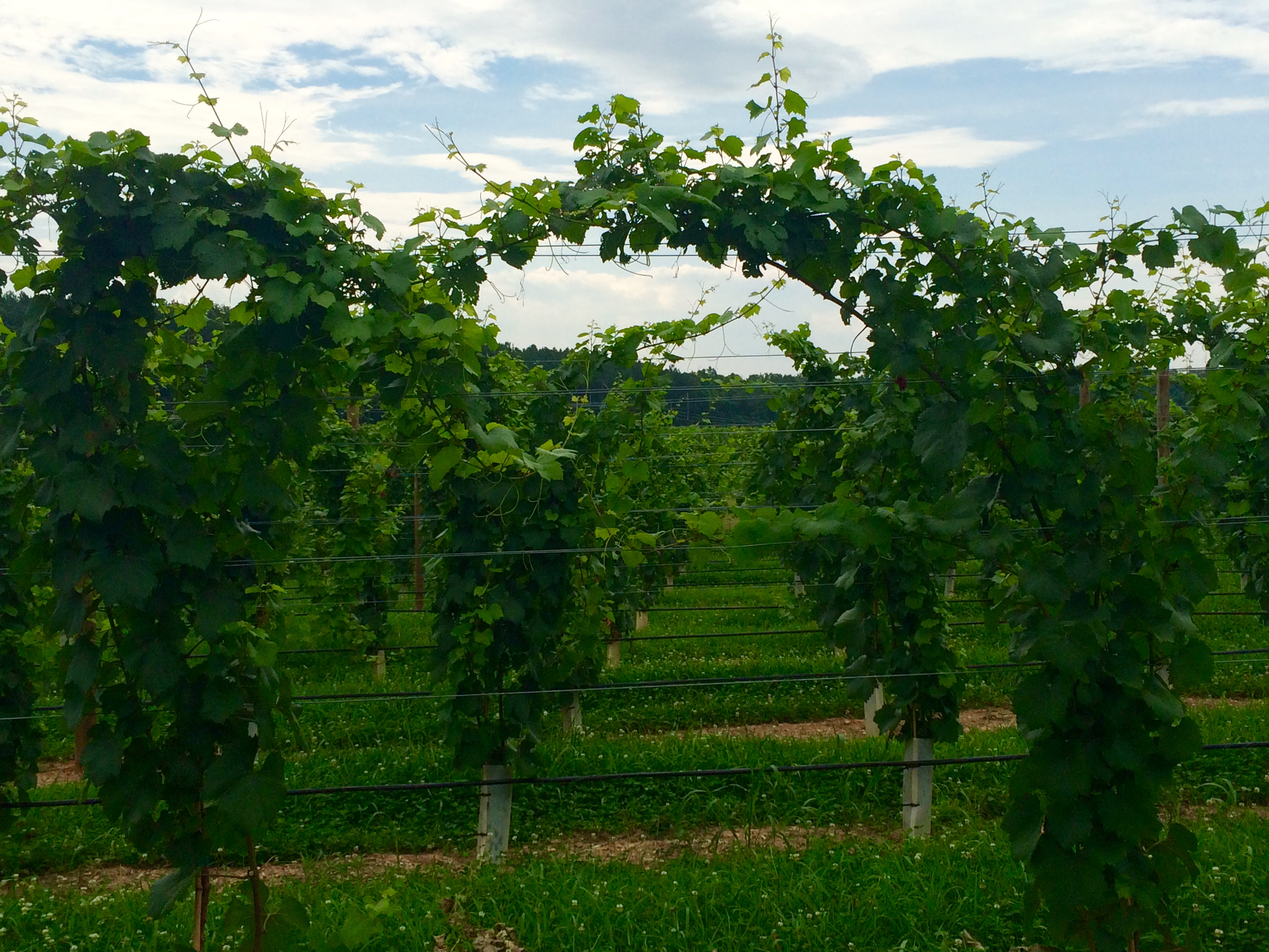 Middle Fork Farm and Vineyard, Scottsville, VA