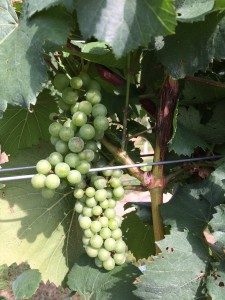 Middle Fork Farm Chardonnay