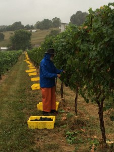 Harvesting in the Rain LHV